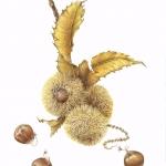 Castanea dentata / American Chestnut